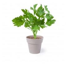 Zestaw ziołowy