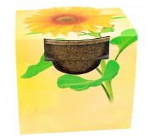 Biodegradowalna doniczka słonecznik