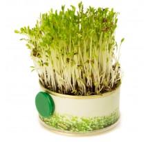 Mały ogródek z magnesem