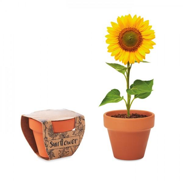 Doniczka z nasionami słonecznika
