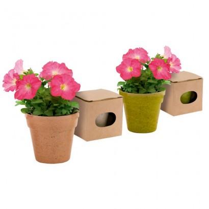 Doniczka do kwiatów, w zestawie 5-8 nasion