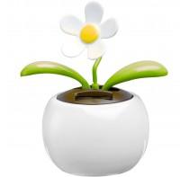Doniczka z kwiatkiem poruszającym się pod wpływem